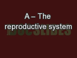 A – The reproductive system