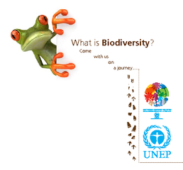 What is Biodiversity Come with us on a journey  From t