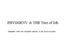 PHYOGENY & THE Tree of life PowerPoint PPT Presentation