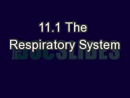 11.1 The Respiratory System