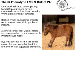 The IR Phenotype EMS & Risk of PAL PowerPoint PPT Presentation