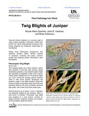 Twig blights of juniper