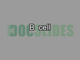 B  cell PowerPoint PPT Presentation