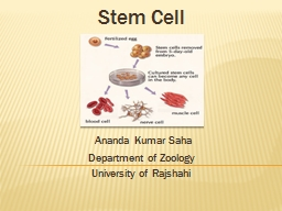 Stem Cell   Ananda  Kumar