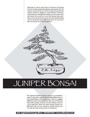 The Japanese Garden Juniper Juniperus procumbens nana