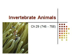 Invertebrate Animals Ch 29 (745 - 758) PowerPoint PPT Presentation