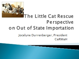 The Little Cat Rescue Perspective