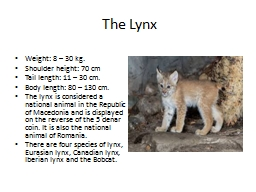 The Lynx Weight: 8 – 30 kg.