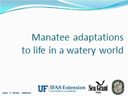 Manatee adaptations to life in a watery world PowerPoint PPT Presentation