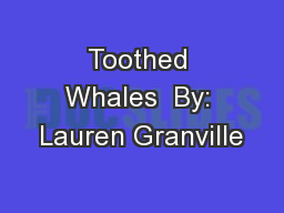 Toothed Whales  By: Lauren Granville