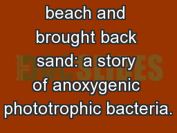 I went to the beach and brought back sand: a story of anoxygenic phototrophic bacteria. PowerPoint PPT Presentation
