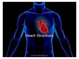 Heart Structure Heart – located in mediastinum within the thoracic cavity
