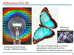 Diffraction Part III  The color of butterfly wings is