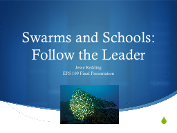 Swarms and Schools: Follow the Leader