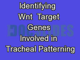 Identifying  Wnt  Target Genes Involved in Tracheal Patterning
