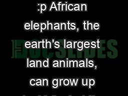 The elephant  :p African elephants, the earth's largest land animals, can grow up to 11 feet at the