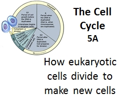 The Cell Cycle 5A How eukaryotic cells divide to make new cells