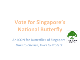 Vote for Singapore's National Butterfly PowerPoint PPT Presentation