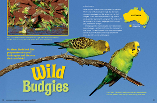 Want to track down a flock of parakeets in the wild Th PowerPoint PPT Presentation