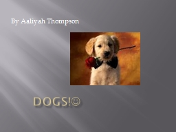 Dogs! By Aaliyah Thompson PowerPoint PPT Presentation