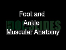 Foot and Ankle  Muscular Anatomy