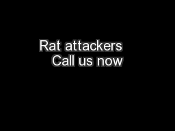 Rat attackers   Call us now