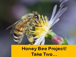 Honey Bee Project!  Take Two… PowerPoint PPT Presentation