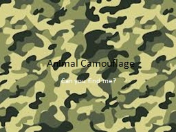 Animal Camouflage Can you find me?