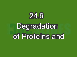24.6  Degradation of Proteins and