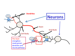 Axon End Buds Cell Body Dendrites PowerPoint PPT Presentation