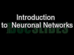 Introduction to  Neuronal Networks