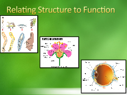 Relating Structure to Function