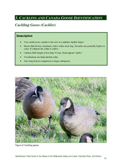 Identification Field Guide to the Geese of the Willame