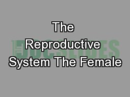 The Reproductive System The Female