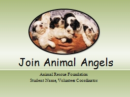 Join  Animal Angels Animal PowerPoint PPT Presentation