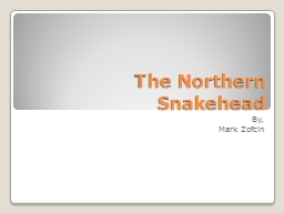The Northern Snakehead By,
