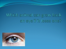 Which animal can grow back an eye if it loses one?