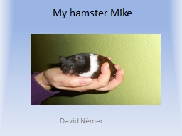 My  hamster   Mike David Němec