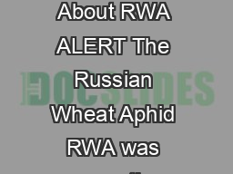As If There Weren  t Other Things to Worry About RWA ALERT The Russian Wheat Aphid RWA was recently spotted in a Morrow County wheat field