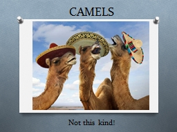 CAMELS Not this kind! What does it stand for?