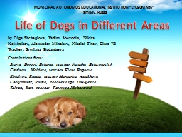 Life of Dogs   in Different Areas