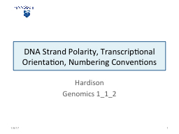 DNA  Strand Polarity, Transcriptional Orientation, Numbering Conventions