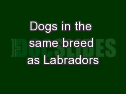 Dogs in the same breed as Labradors