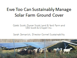 Ewe Too Can Sustainably Manage Solar Farm Ground Cover