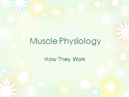 Muscle Physiology How They Work