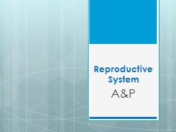 Reproductive System A&P