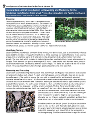 Overview sacred bark is a large deciduous shrub tree f