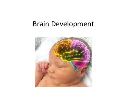 Brain Development Essential Question: How does a baby's brain develop and what can I do to help i