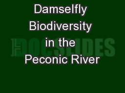 Damselfly Biodiversity in the Peconic River