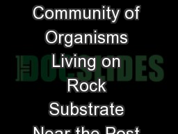 What is the Makeup of the Community of Organisms Living on Rock Substrate Near the Post in the Long PowerPoint PPT Presentation